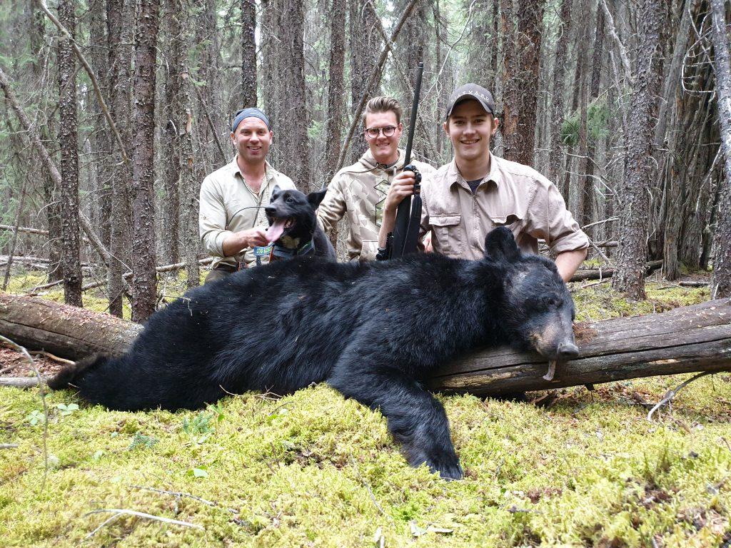 svartbjörn