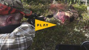 Vildmarken Play: Björnjakt med närkontakt