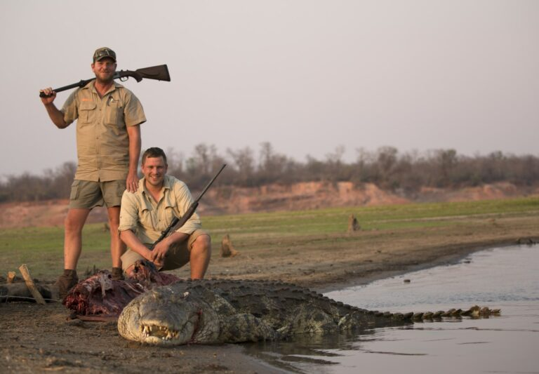 Krokodille - 06-1 (Large)